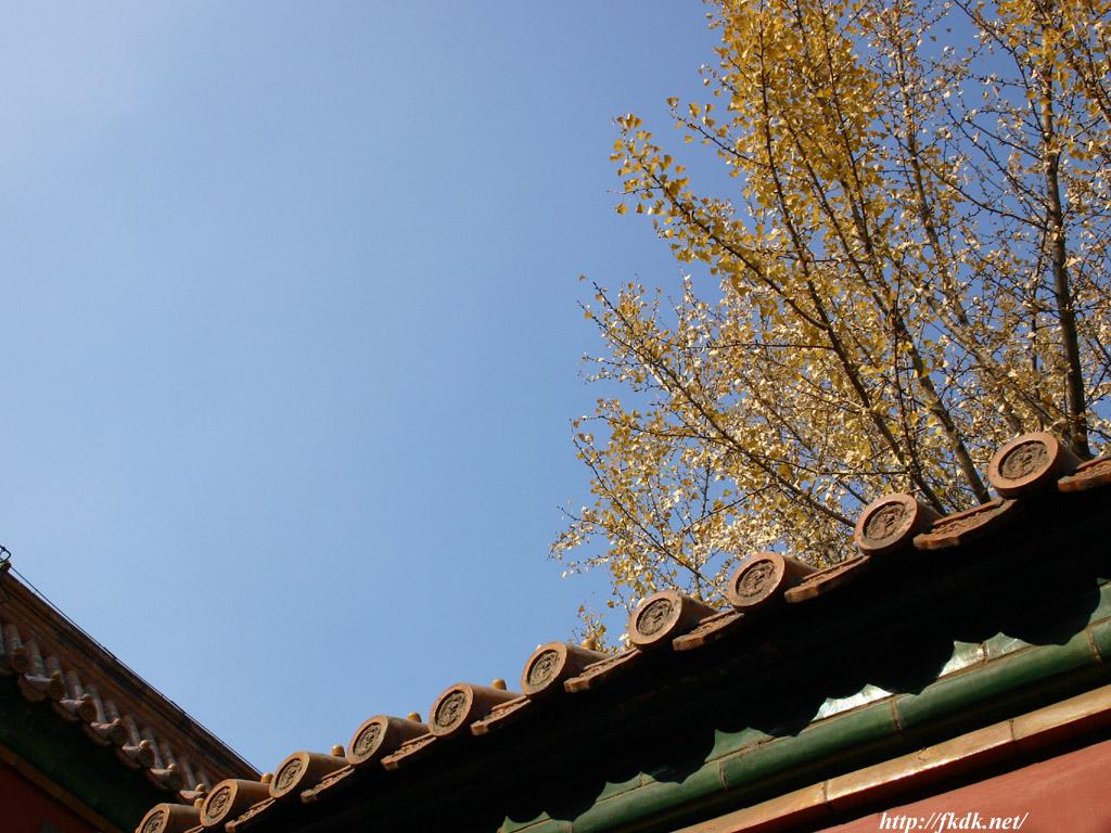 故宮の屋根と空