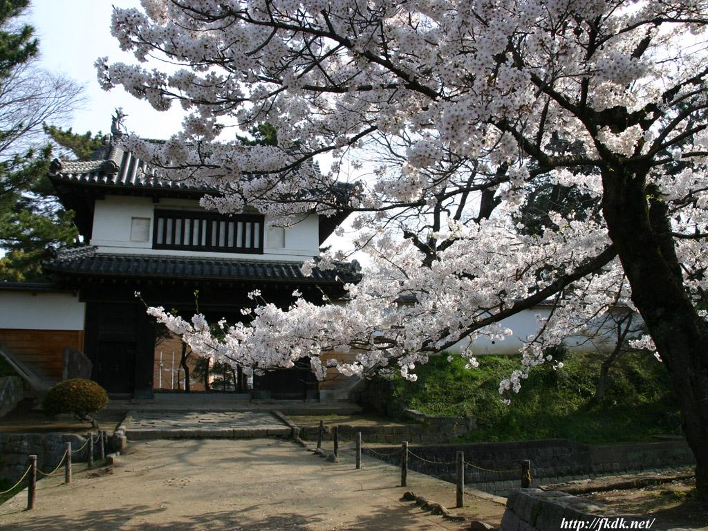 亀城公園の門とさくら