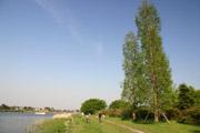 ポプラの木と城沼