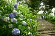 雨引観音の石階段