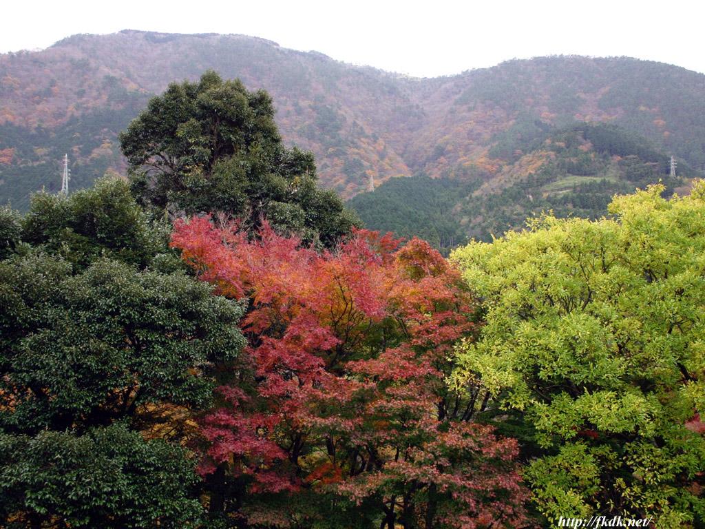 箱根の紅葉1
