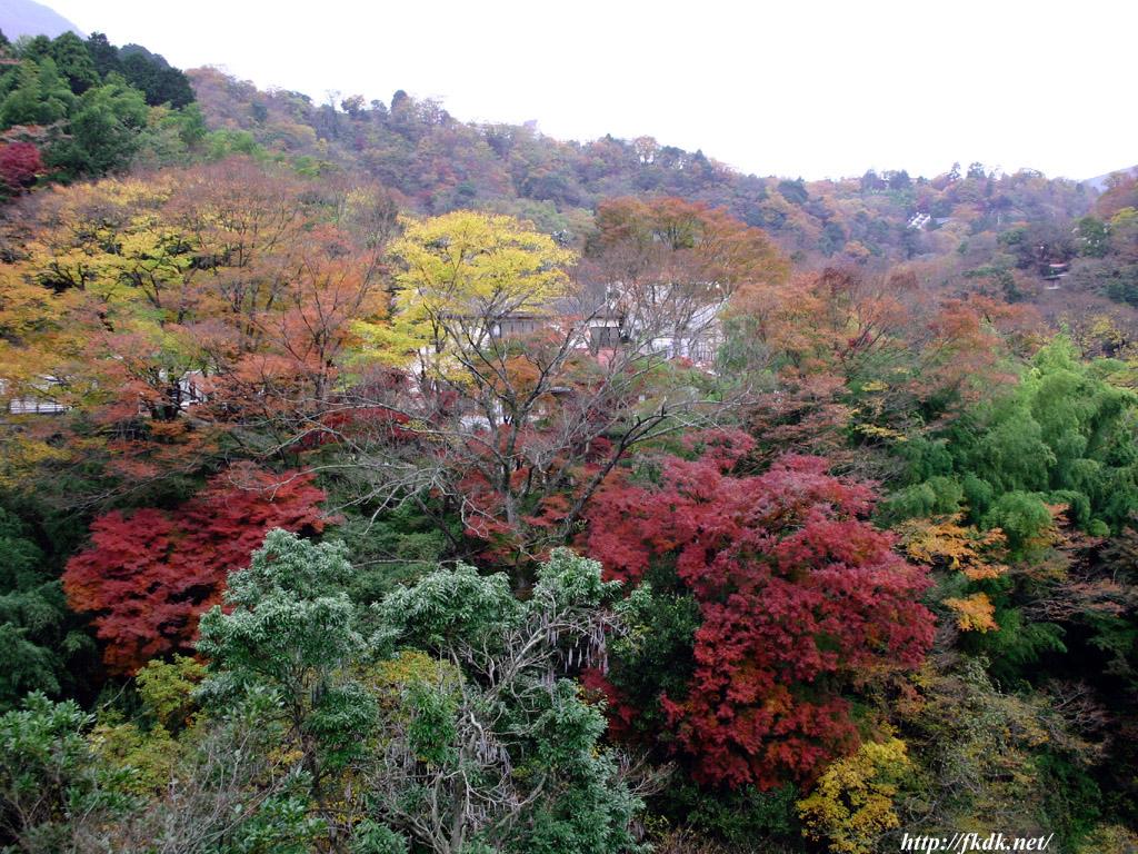 箱根の紅葉2
