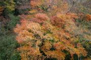 箱根の紅葉3