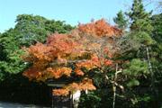 鎌倉の紅葉2