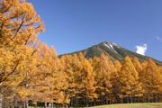 落葉松の黄葉と男体山