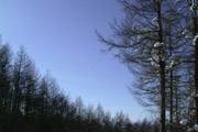 スキー場林間コース
