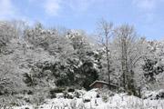 森の雪景色1