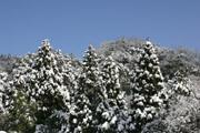 森の雪景色2
