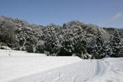 畑に積もった雪