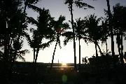 やしの木と朝日の壁紙