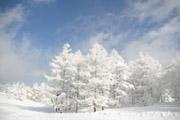 霧氷で輝く木々の壁紙