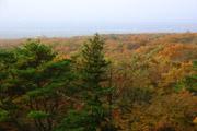 那須高原の紅葉の壁紙