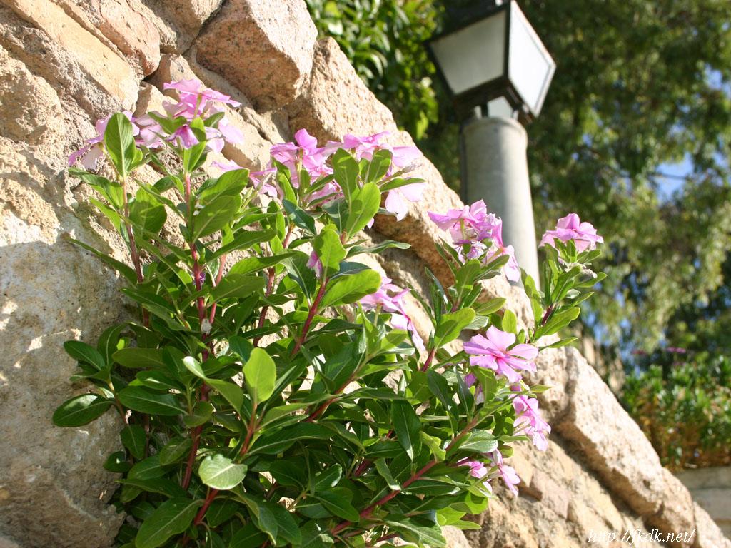 アルカサル庭園の花