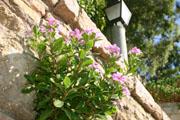 アルカサル庭園の花の壁紙