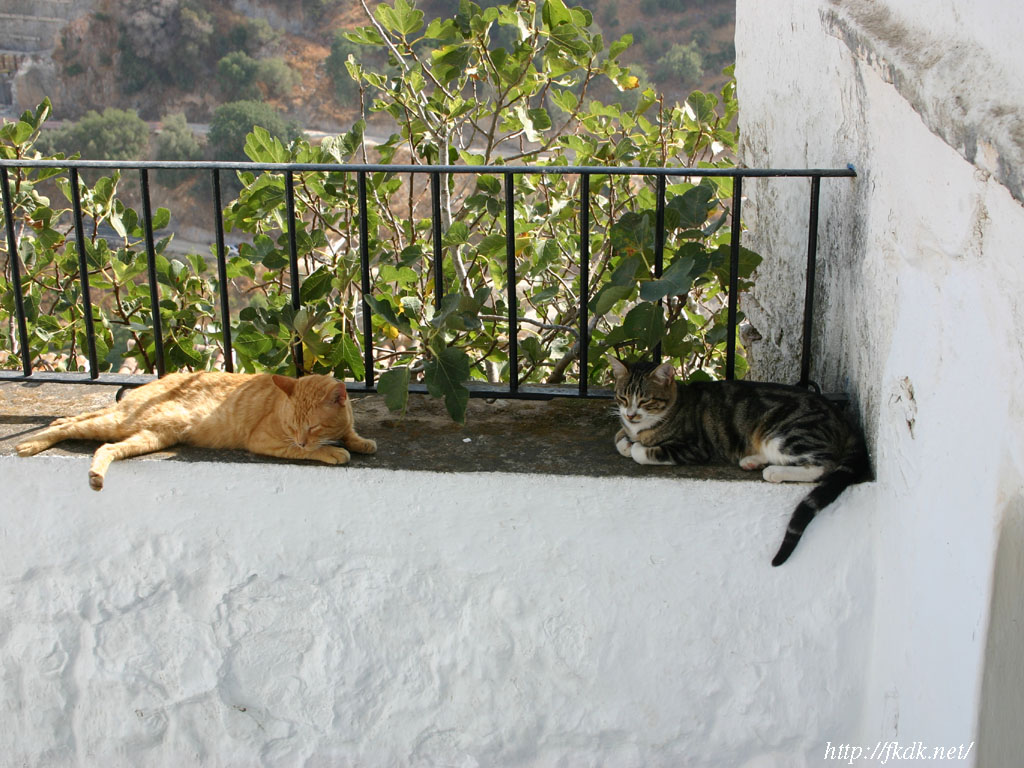 カサレスの猫